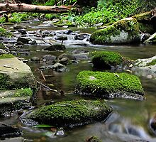 Stepping Stones by Stephen Ruane