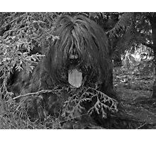 Teddy #1 Photographic Print