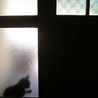 Black Cat Waiting by Katrina Gubbins