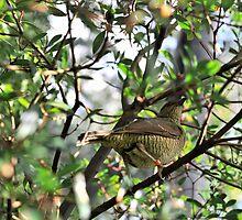 Female Bower Bird by BrockLobster