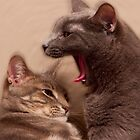 Ahhh.... Cats! by socalmark