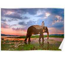 Elephant sunset, Vietnam Poster