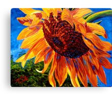 Sunflower in the Sunlight Canvas Print