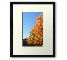 Color Genius Framed Print