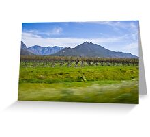 Vinyard with Mountains in the background Greeting Card