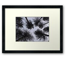 Looking up at the trees Framed Print