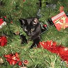 Christmas Cat by JillyPixie