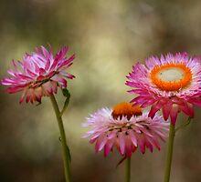 Pink Flowers Newcastle Botanic Gardens by Ann Barnes