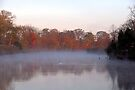 Foggy Morning by Kim McClain Gregal