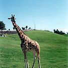 Giraffe  by andytechie