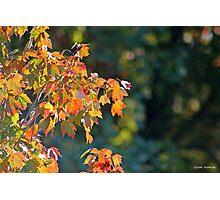 Autumn Light and Dark Photographic Print