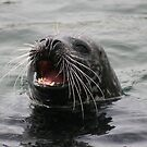 Svolværs sjøløven - The sea lion of Svolvær. by ellismorleyphto