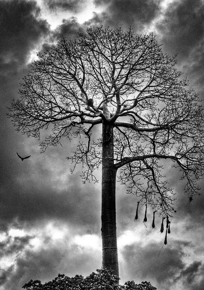 Tree against a dark moody sky by Carlos Restrepo