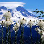 Bear Grass with Mt. Rainier by Jodi Morgan
