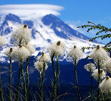 Bear Grass with Mt. Rainier by Jodi Morgan