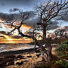 Kauai Beach at Sunrise by Philip James Filia