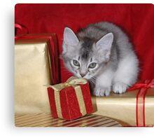 Somali kitten amongst Christmas presents Canvas Print