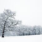 Winter Wonderland by Donna-R