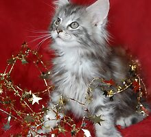 Maine Coon kitten wrapped in tinsel! by sarahnewton