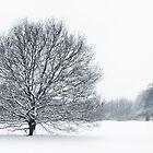 Winterland by Donna-R