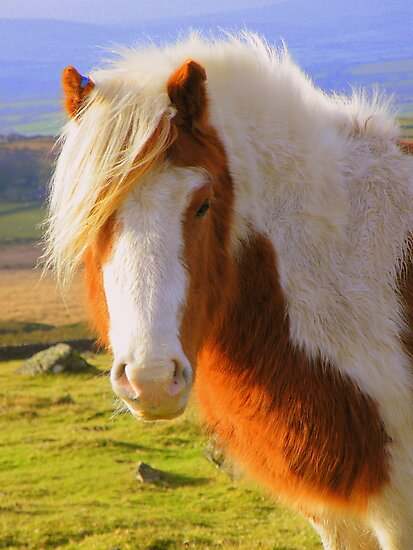 Dartmoor: A Pony with Style by Rob Parsons