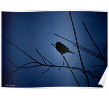 Blue Shadow Bird III Poster