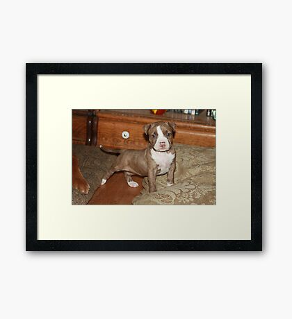 I Am Cinamon Hear Me ROAR! 09 Framed Print