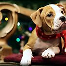 ESTER'S CHRISTMAS by CRYROLFE
