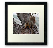 Furry Friend Framed Print