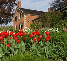 Tulip Garden - Marvelous Spring Flower Beds With Red Tulips and More by Georgia Mizuleva