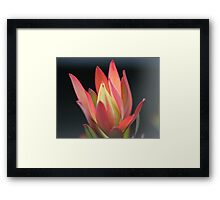 A  touch of class. Framed Print
