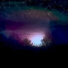 Stars and Midnight Blue by Judi Taylor