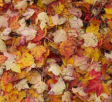 Fall Leaves by MichiganGirl