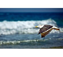 horizontal flying Photographic Print