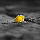 Abandoned flower by evilcat