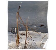 reeds in the ice Poster