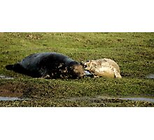 Guess What Mum - Watercolor Grey Seal With Pup Photographic Print