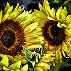 Two Sunflowers by Brian Walter