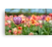Cornish Tulips in Bloom Canvas Print