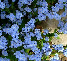 Forget me not. II by Bluesrose