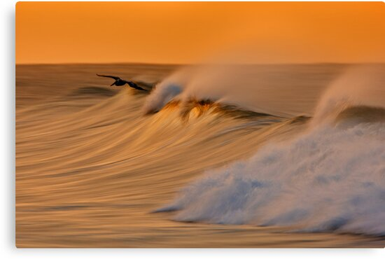 Dawn Pelican and Wave by David Orias