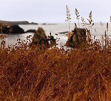 Coastal Grass by Jon Yager
