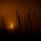 Misty Sunrise by Pene Stevens