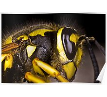 Common wasp close-up Poster