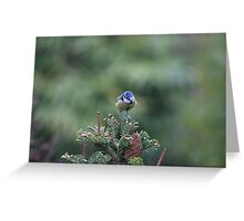 Perched on a pine tree Greeting Card