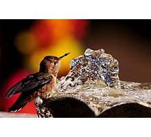 FOUNTAIN FUN...RUFOUS HUMMING BIRD.. Photographic Print