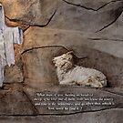 The Lost Sheep by Bonnie Comella