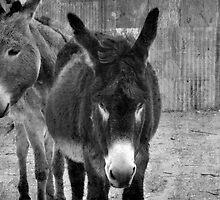 Silverton Donkeys by GiGee