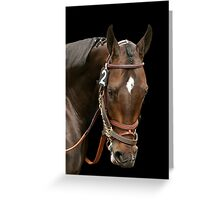 """Thoroughbred Champion """"Pioneer of the Nile"""" Greeting Card"""