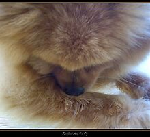 Shy Pomeranian Pup by Louise Page